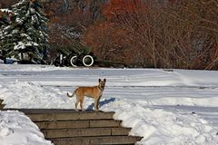 Hund im schneebedeckten Park Lizenzfreie Stockbilder