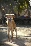 Hund im Schotterweg Stockfotos