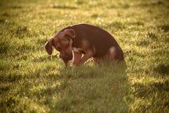 Hund im Sonnenlicht Lizenzfreie Stockbilder