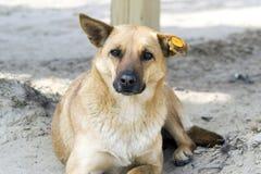 Hund im Spielplatz Lizenzfreie Stockfotografie