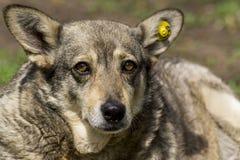 Hund im Spielplatz Lizenzfreies Stockfoto