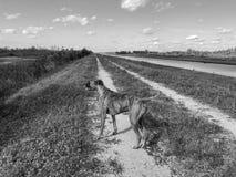 Hund im Sumpf lizenzfreies stockbild