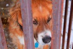 Hund im Tierheim Stockfoto