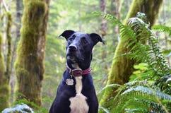 Hund im Wald Stockbild