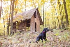 Hund im Wald Stockfoto
