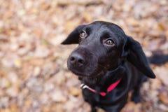 Hund im Wald Lizenzfreie Stockbilder