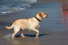 Hund im Wasser Stockfoto