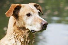 Hund im Wasserhintergrund Lizenzfreies Stockbild