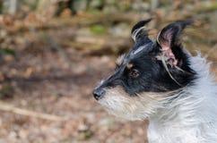 Hund im windigen Wetter Lizenzfreie Stockbilder