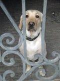 Hund im Yard hinter Gittern Stockfotos