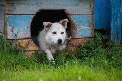 Hund innerhalb der Hundehütte Stockfotos