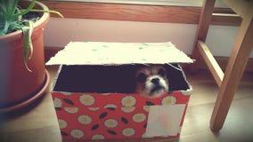 Hund innerhalb einer Geschenkbox stockfotografie