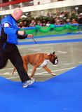 hund- internationell show 59 Royaltyfria Bilder