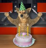 Hund isst den Geburtstagskuchen lizenzfreies stockbild
