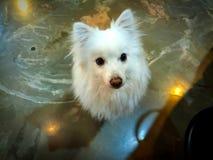 Hund ist der beste Freund von Menschlichkeit stockfoto