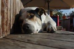 Hund ist Schlaf auf hölzernen Brettern Stockfoto