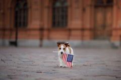 Hund Jack Russell Terrier in der alten Stadt stockfotografie