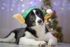 Hund- jultomten hjälpreda arkivbilder