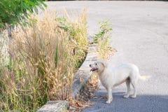 Hund kam für einen Weg in der Straße heraus lizenzfreies stockfoto