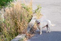 Hund kam für einen Weg in der Straße heraus lizenzfreie stockfotografie