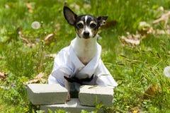 hund- karate Arkivbild