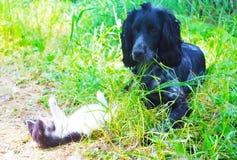 Hund, Katze, stockfotos