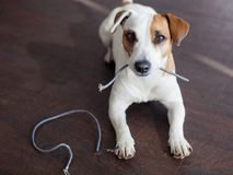 Hund kaute die Drähte Stockfoto