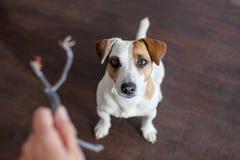 Hund kaute die Drähte Lizenzfreies Stockbild