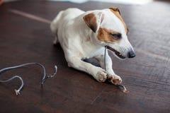 Hund kaute die Drähte lizenzfreie stockfotos