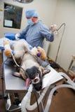 hund- kirurgi Fotografering för Bildbyråer