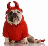Hund kleidete oben als Teufel an Stockbild