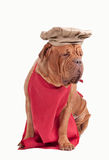 Hund kleidete wie Chef mit rotem Vorfeld- und Chefhut an Lizenzfreies Stockbild