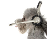 hund- kundtjänst Arkivfoto