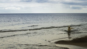 Hund Labrador im Meer Lizenzfreies Stockbild