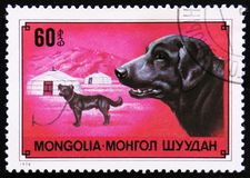 Hund Labrador retriever, circa 1978 Stockfotos