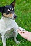 Hund legt seine Tatze auf menschliche Hand Lizenzfreies Stockbild