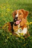 Hund liegt auf einem Blumengebiet Lizenzfreie Stockfotografie