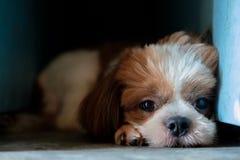 Hund liegt in der dunklen Ecke Stockfoto