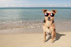 Hund lilla Fawn Beach Sea Sunglasses royaltyfria foton