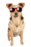 Hund lilla Fawn Red Sunglasses Isolated Royaltyfri Foto