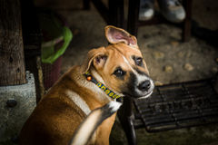 hund little arkivbild