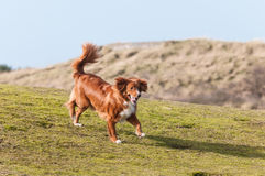 hund little profilflod Arkivfoto
