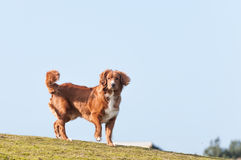 hund little profilflod Arkivbilder