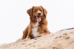 hund little profilflod Royaltyfri Bild
