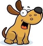 hund little som sitter Arkivbild