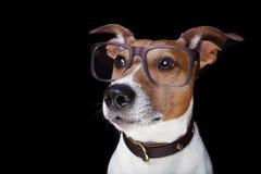 Hund lokalisiert auf Schwarzem Stockfotos
