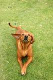 Hund lustig Stockbild