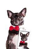 Hund machen selfie Lizenzfreies Stockfoto