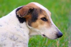 Hund-man& x27; s-bästa vän royaltyfria bilder