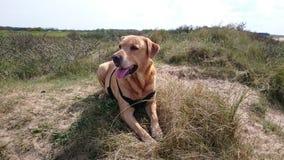 Hund max Lizenzfreies Stockfoto